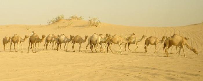 0911 desert