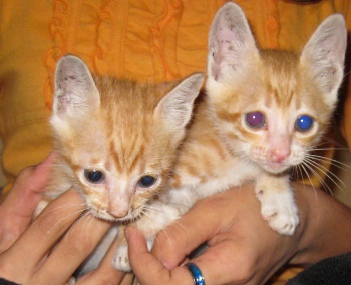 0911 kittens